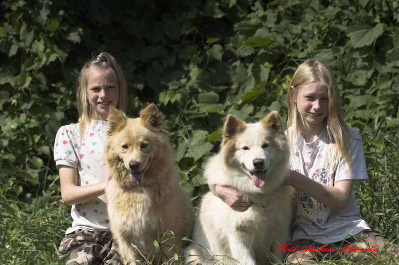 Northern Glories: Our New Home; Alaskan Malamute Rescue Of
